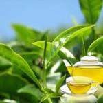 Зеленый чай – ароматная польза