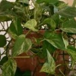 Искусственное освещение домашних растений