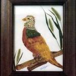 Золотистый фазан.
