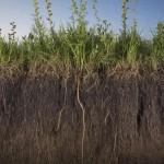 Исключительная роль почвенно-грунтовой толщи.