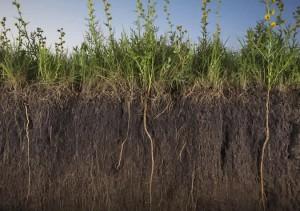 роль почвенно-грунтовой толщи