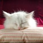 Моя милая сонная кошка.