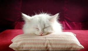 Моя милая сонная кошка