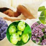 Что пить вечером? 8 полезных трав для хорошего сна!